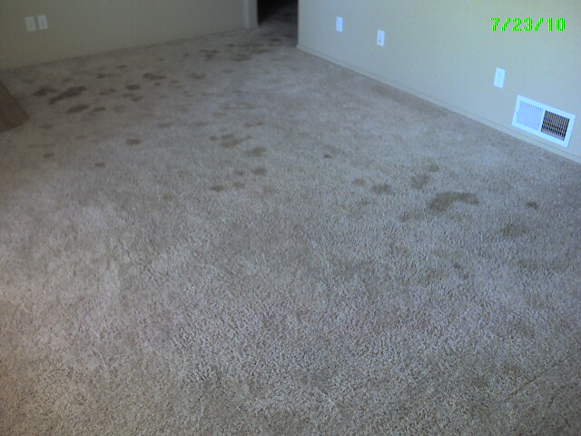 how to clean up diarrhea on carpet